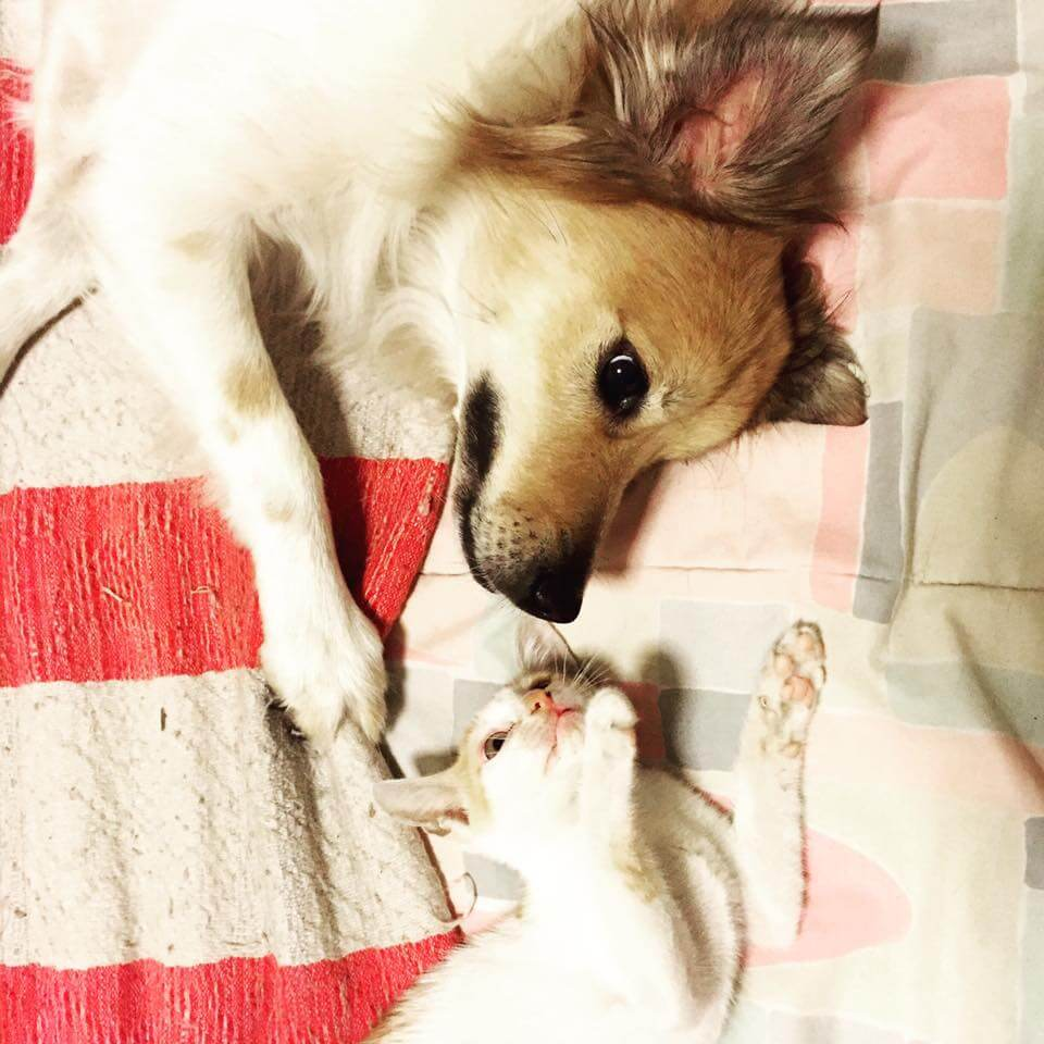 Walker-a-hopeless-and-mangy-mutt-is-transformed-by-TLC-he-loves-cats