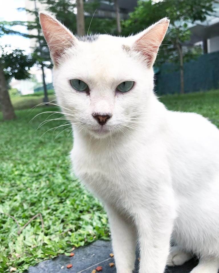 A BGC cat angel