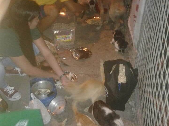 Over 200 Pasig Pets are waiting in vain for their families