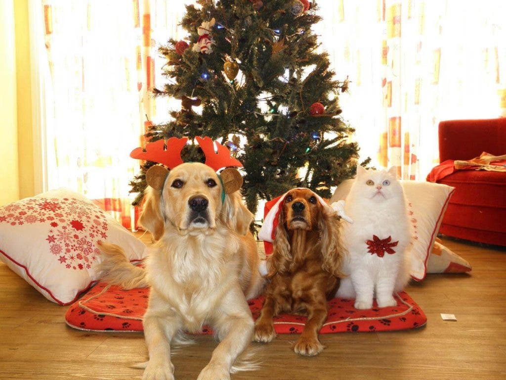 FREE Spay and Neuter for a wonderful Christmas gift for your pets and you