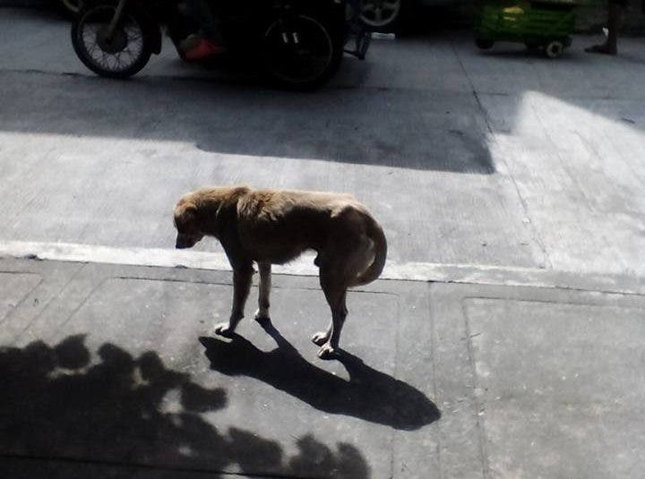 Please help this Cubao Dog