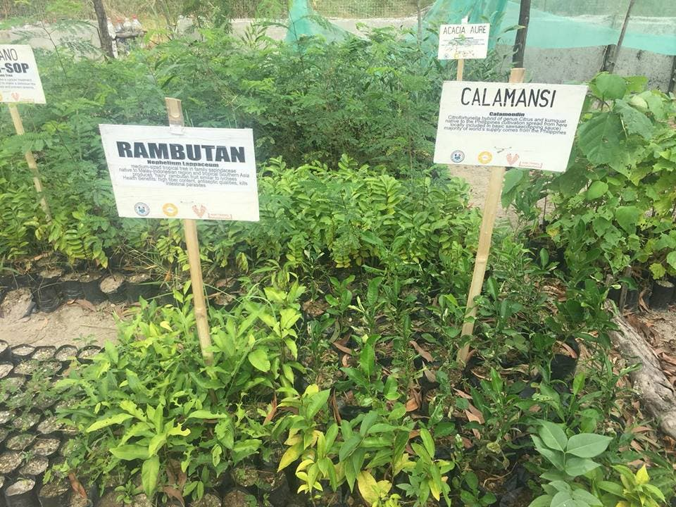 Give your caamansi seeds to help aeta villages in Zambales