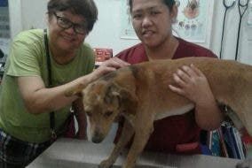 Sugar, the loyal Cubao dog , is now rescued