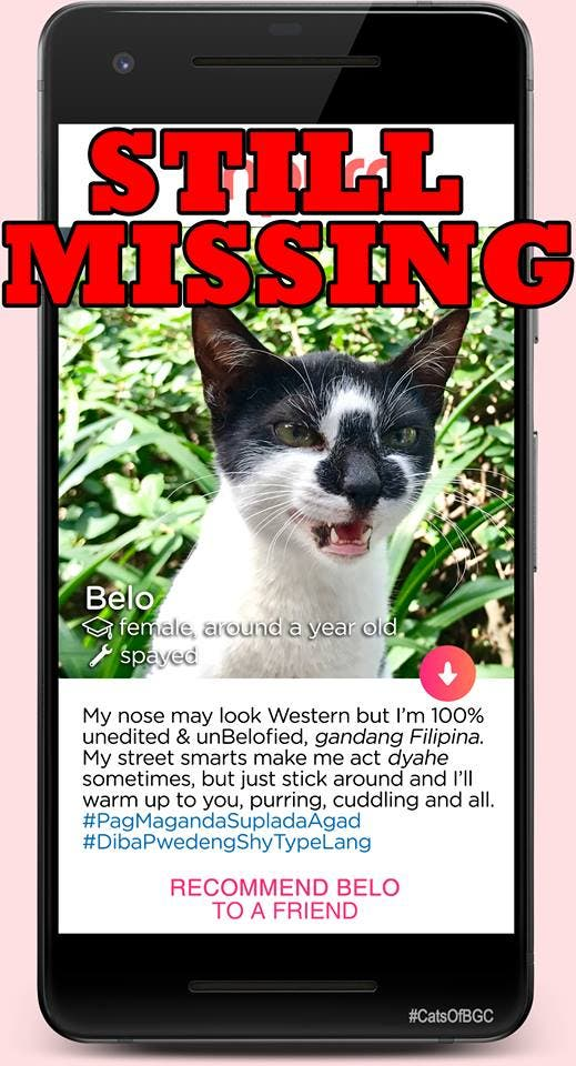 Belo is one of the cats of BGC, now missing as he was one of the cats that was relocated from high Street to another part of Taguig