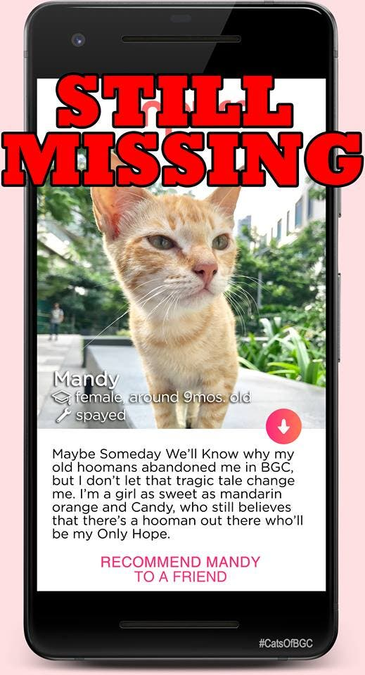 Mandy is one of the cats of BGC, now missing as she was one of the cats that was relocated from high Street to another part of Taguig