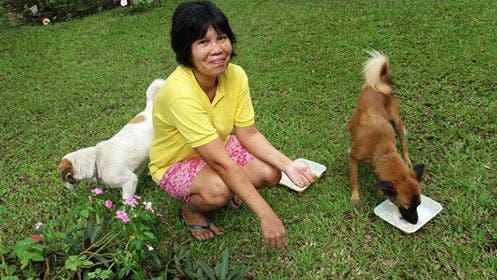 Princess and Kaye used to be among the dogs for eviction from a Sta. Mesa vacant lot. They are now adopted dogs.