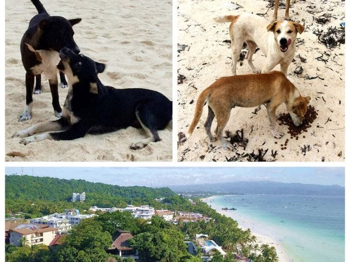 What will happen to the Boracay Dogs? Photo by AARRC