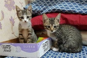 Cats of Mckinley -- kittens being fostered