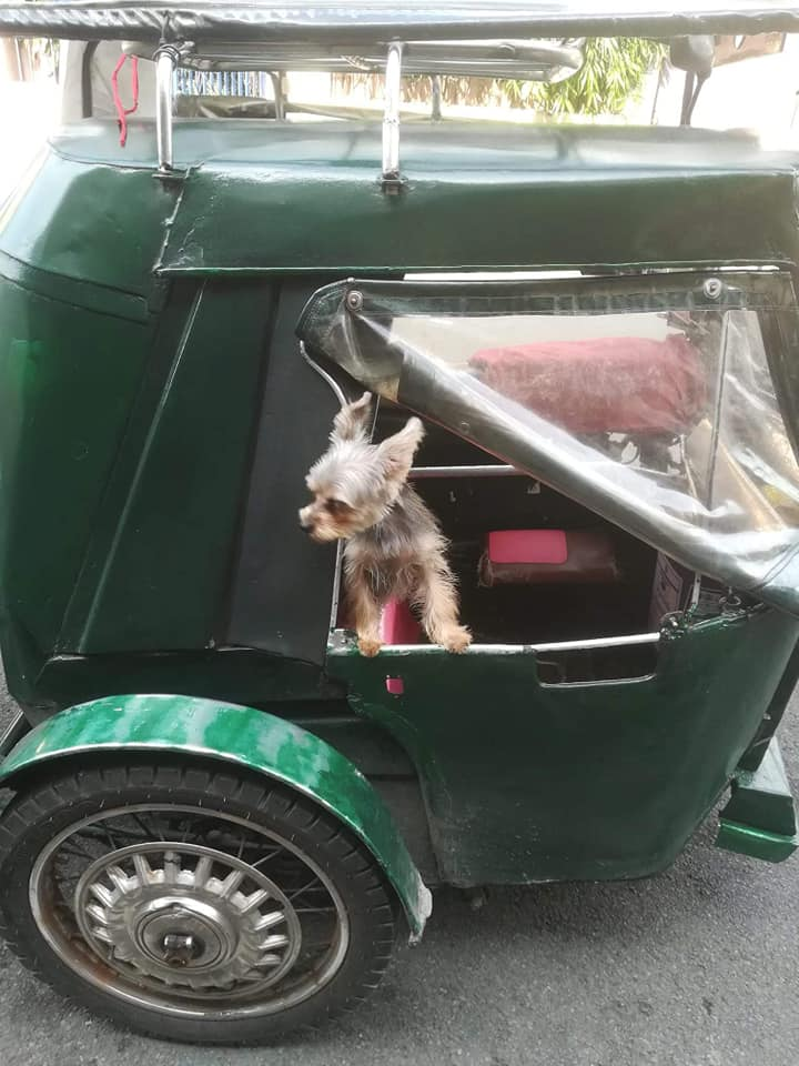 MISSING Yorkshire Terrier DOG MARIKINA Leather in a tricycle