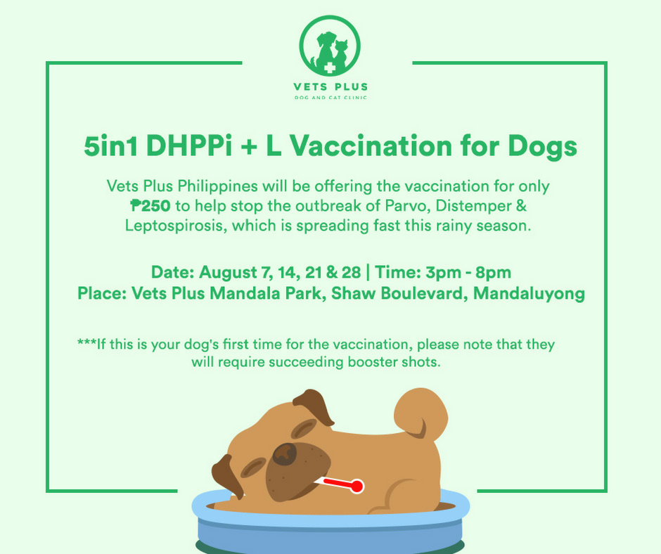 You Can Get the 5-in-1 Canine Vaccination for Only Php250 at