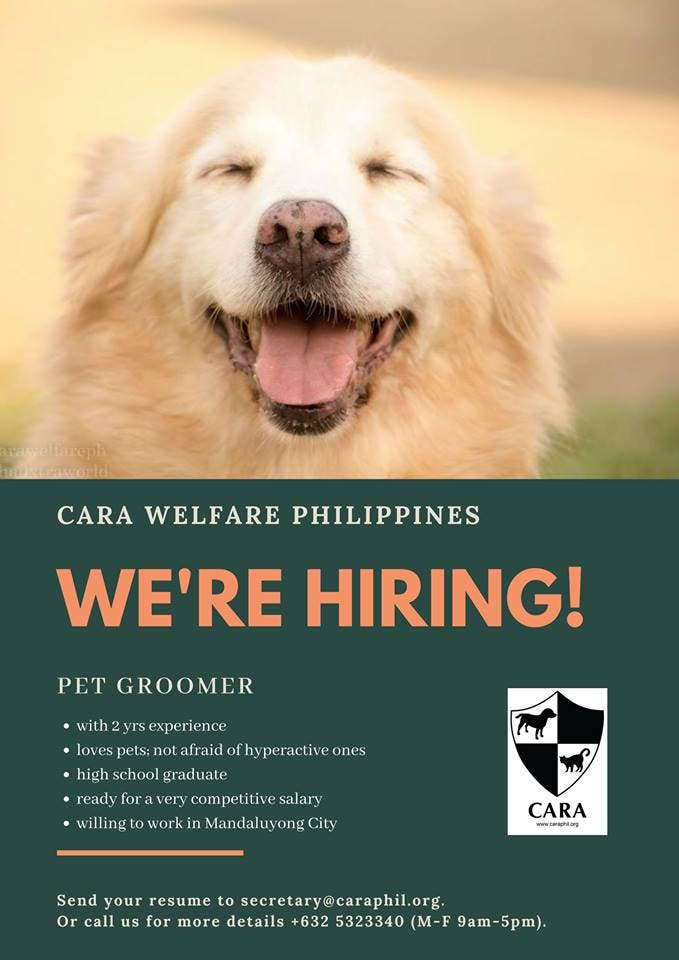 wanted pet groomer for CARA Welfare Philippines